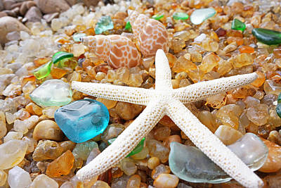 Starfish Art Prints Shells Agates Coastal Beach Poster by Baslee Troutman