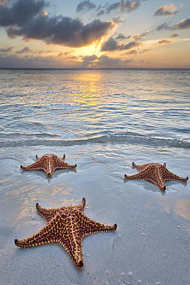 Starfish Beach Sunset Poster