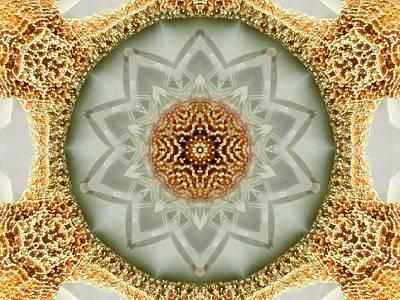 Starfish Crystal Mandala Poster