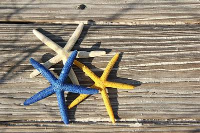 Poster featuring the photograph Starfish by Elizabeth Budd