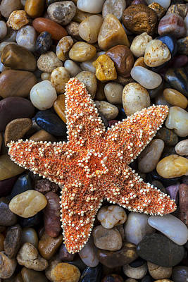 Starfish On Rocks Poster by Garry Gay