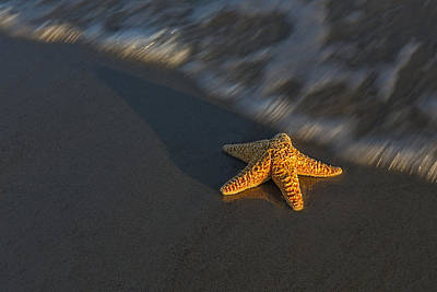 Starfish On The Beach Poster by Susan Candelario