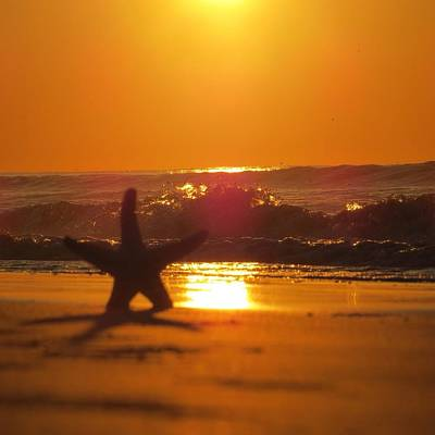 Poster featuring the photograph Starfish Sunrise by Nikki McInnes