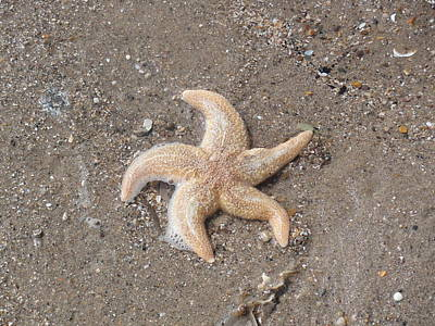 Poster featuring the photograph Starfish by Tiffany Erdman
