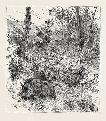 Starts A Pig While Looking For Woodcock Poster by English School