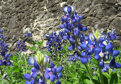Poster featuring the photograph State Flower Of Texas - Bluebonnets by Ella Kaye Dickey