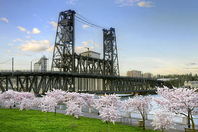 Steel Bridge And Cherry Blossom Trees In Portland Oregon Poster