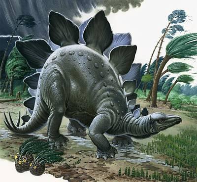 Stegosaurus Poster by English School