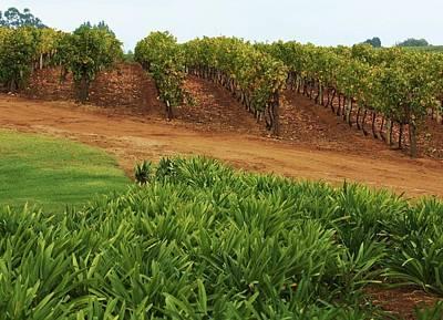 Stellenbosch Vineyard Poster