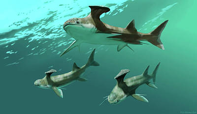 Stethacanthus Sharks Poster
