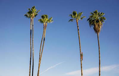 Sticky Palms Poster by Shukis Lockwood