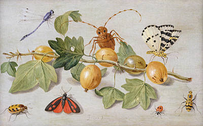 Still Life Of Branch Of Gooseberries Poster