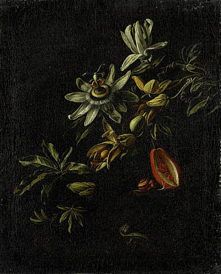 Still Life With Passion Flowers, Elias Van Den Broeck Poster by Litz Collection