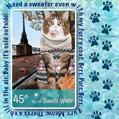 Still Loving This #weatherwhiskers #app Poster