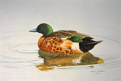 Still Waters - Chestnut Teal Poster
