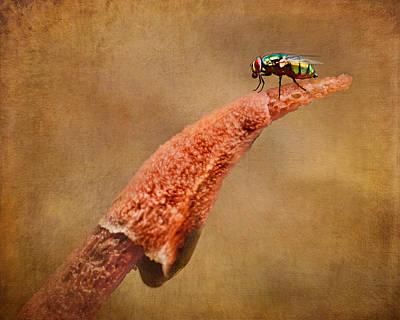 Stinkhorn Mushroom - Fly Poster by Nikolyn McDonald