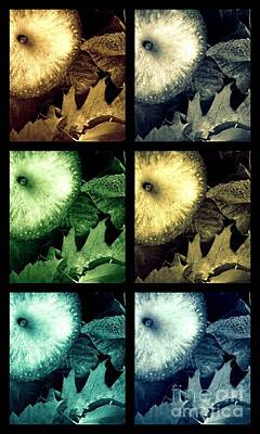 Stone Apples Poster by France Laliberte