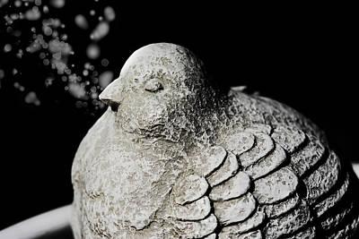 Stone Dove Poster