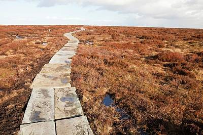 Stone Path Over Peatland Poster by Ashley Cooper