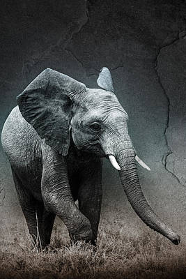 Stone Texture Elephant Poster by Mike Gaudaur