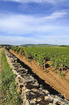 Stone Wall. Vineyard. Cote De Beaune. Burgundy. France. Europe Poster by Bernard Jaubert