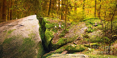 Stony Woods Panoramic Poster by Lutz Baar