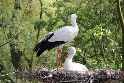 Storks Nesting Poster by Jackie Mestrom