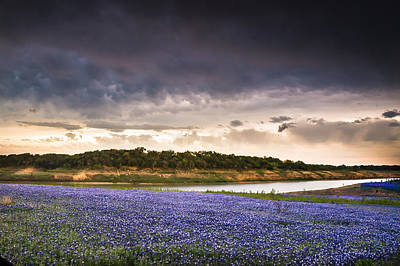 Storm Over Wildflower Field Poster