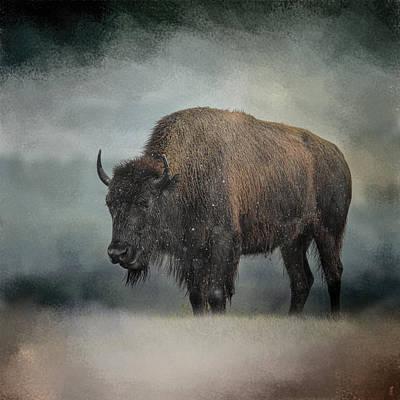 Stormy Day - Buffalo - Wildlife Poster by Jai Johnson