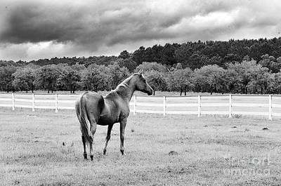 Stormy Pasture Poster