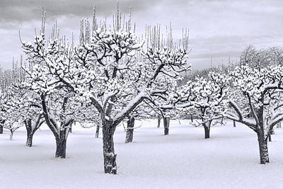 Stormy Snow Blossom Orchard Poster