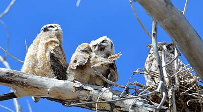 Story Time For The Owlets Part 5 Poster