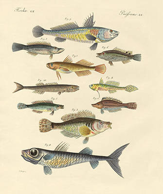 Strange And Beautiful Fish Poster