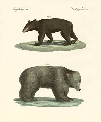 Strange Bears Poster by Splendid Art Prints