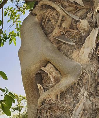 Strangler Fig Humanoid Poster