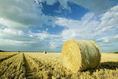 Straw Bales In A Field Poster by Ashley Cooper