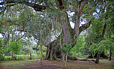 Poster featuring the photograph Strawberry Chapel Oak by Linda Brown