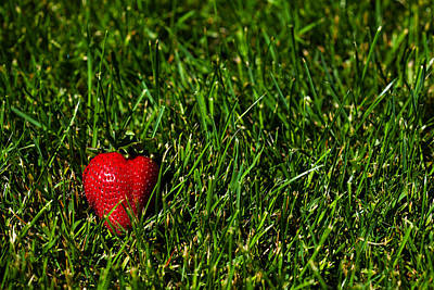 Strawberry Field Poster by Karol Livote