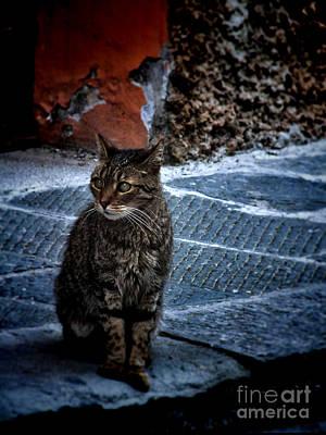 Street Cat Poster by Karen Lewis