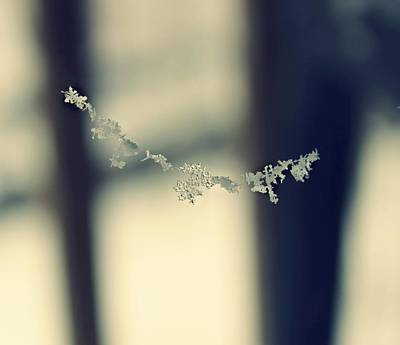 Poster featuring the photograph String Of Snowflakes by Candice Trimble