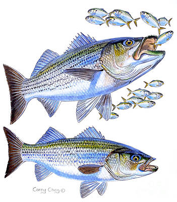 Stripers Poster