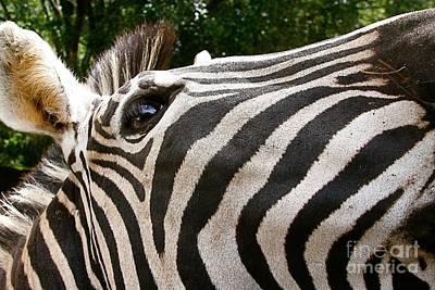 Stripes. Poster by Gary Bridger