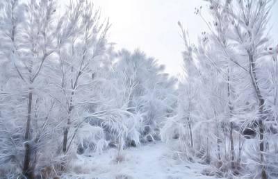 Stroll Through A Winter Wonderland Poster