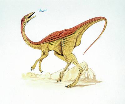 Struthiomimus Dinosaur Poster