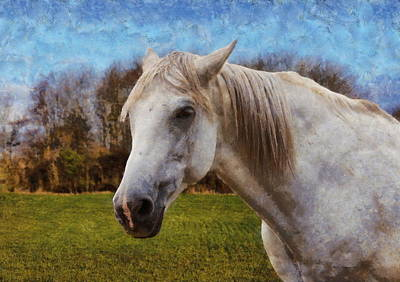 Study Of A Horse Poster