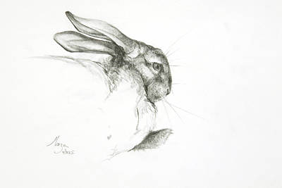 Study Of A Rabbit Poster
