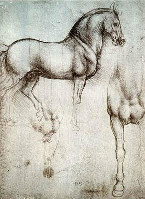 Study Of Horses Poster by Leonardo da Vinci