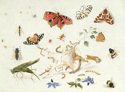 Study Of Insects And Flowers Poster