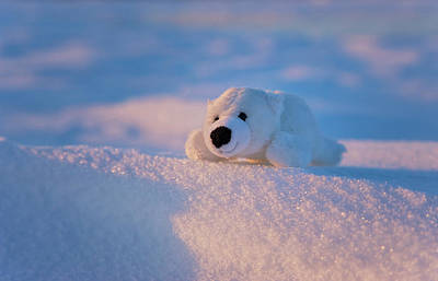Stuffed Toy Of Polar Bear On Snow Poster by Keren Su
