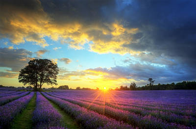 Stunning Atmospheric Sunset Over Vibrant Lavender Fields Poster by Matthew Gibson